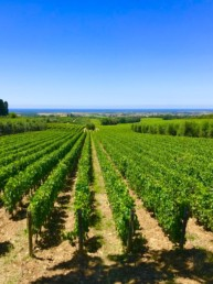 Viticoltura PMA Italy